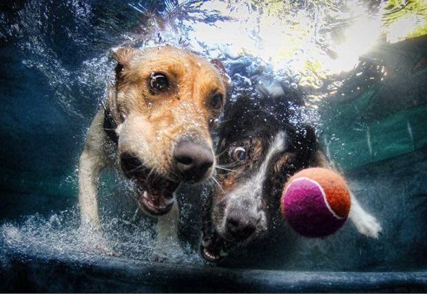 Calendario de perros acuáticos